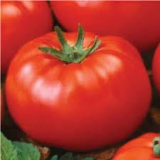 Tomato Determinate