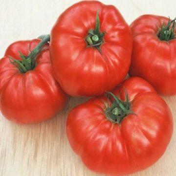 Tomato Indeterminate