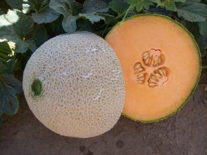Melon - Paloma F1