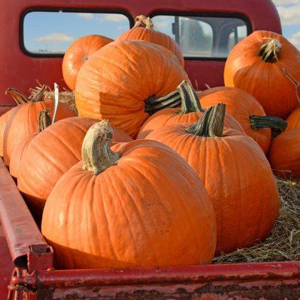 Pumpkins - Big Max
