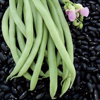 Bean - Black Valentine