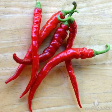 Pepper - Hot