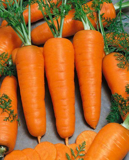 Carrot - Chantenay Royal; Chantenay
