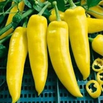 Peppers - Hungarian Yellow Wax