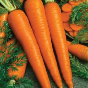 Carrot - Imperator 58; Imperator