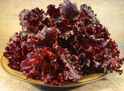 Lettuce - Beleah Rose