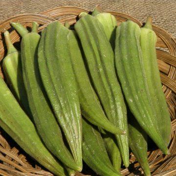 Okra - Long Pod Green