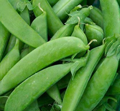 Peas - Mammoth Melting Sugar