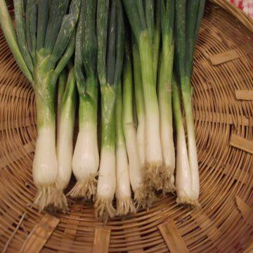Onion - Hieshiko
