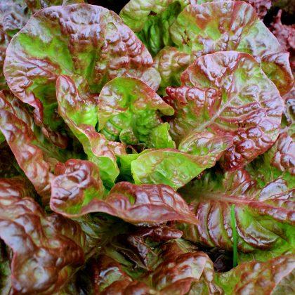 Lettuce - Ruby