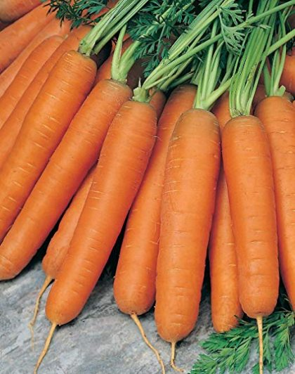 Carrot - Nantes Scarlet; Nantes