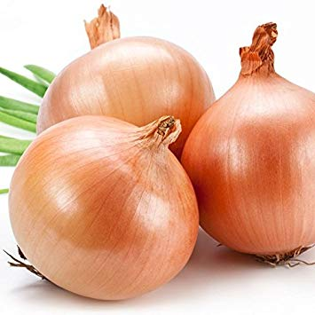 Onion - Texas Early Grano 502