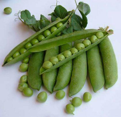 Peas - Utrillo