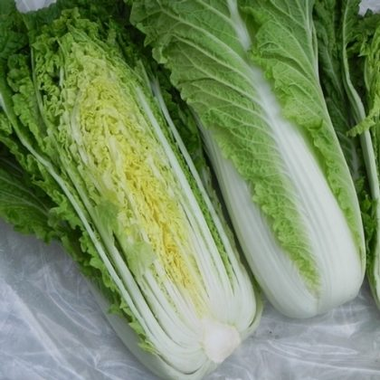 Chinese Cabbage - Michihili Heading