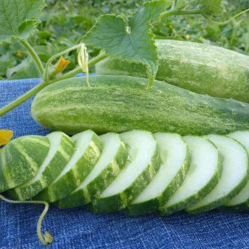 Cucumber - Straight Eight