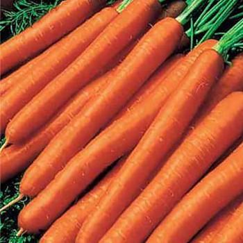 Carrot - Amsterdam; Nantes