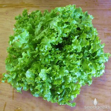 Lettuce - Green Salad Bowl