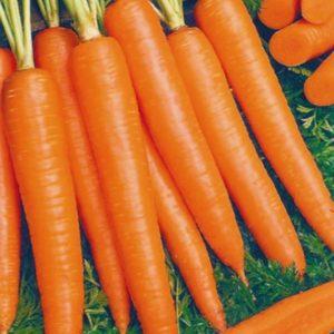 Carrot - Kuroda (Copy)